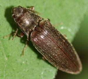 Кто ест тараканов из насекомых. разновидности тараканов, образ жизни, среда обитания и поведение. роль и значение насекомого в природе