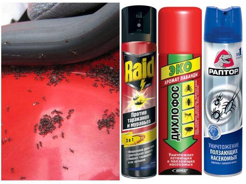 Как вывести муравьев из дома самостоятельно