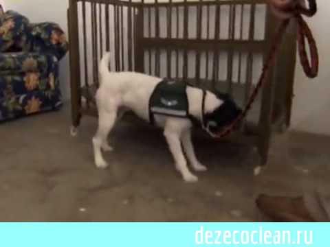 Как действуют капли от блох для собак