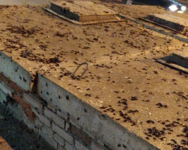 Кто питается тараканами