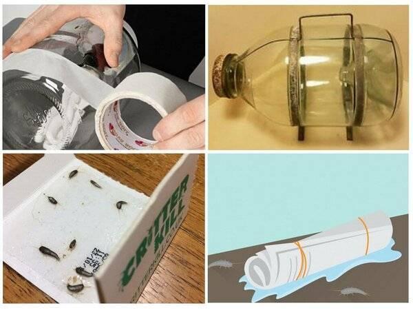 Как избавиться от чешуйницы в домашних условиях