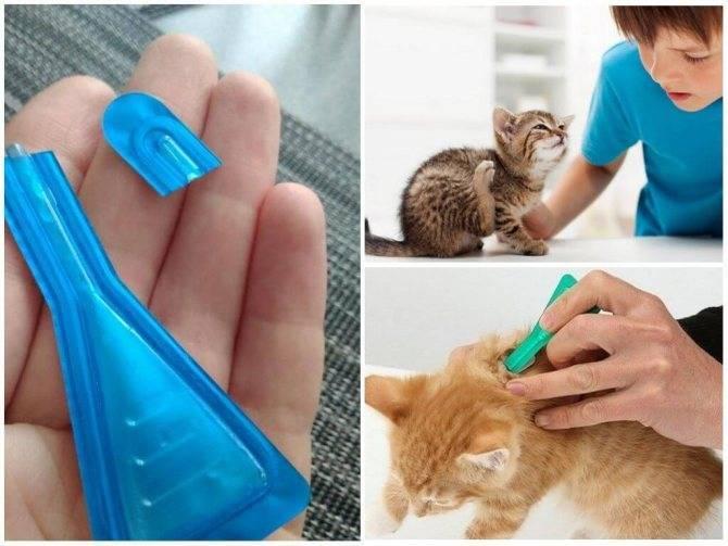 Как и чем вывести блох у котенка в домашних условиях