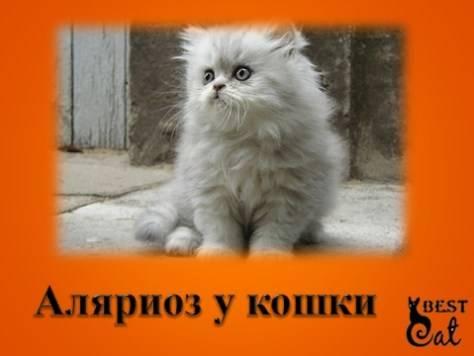 Подкожный клещ у кошек - симптомы и лечение