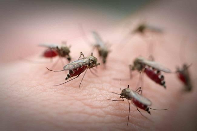 Средство от комаров из дегтя. отвар из гвоздики. березовый деготь от слизней