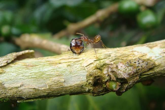 Избавляемся от личинок, которые появляются после мух