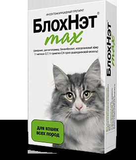 Клещ у кота: укусил, что делать, опасны ли