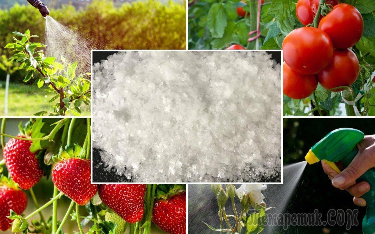 Как избавиться от муравьев в огороде раз и навсегда