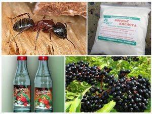Как избавиться от домашних муравьёв