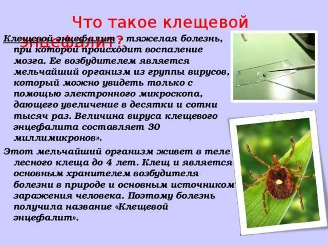 Описание и фото клещей на животных