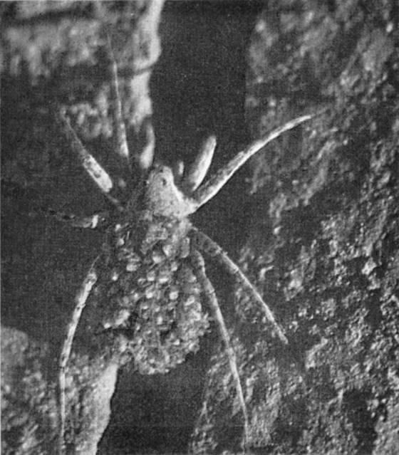 Майский жук: хищник или нет?