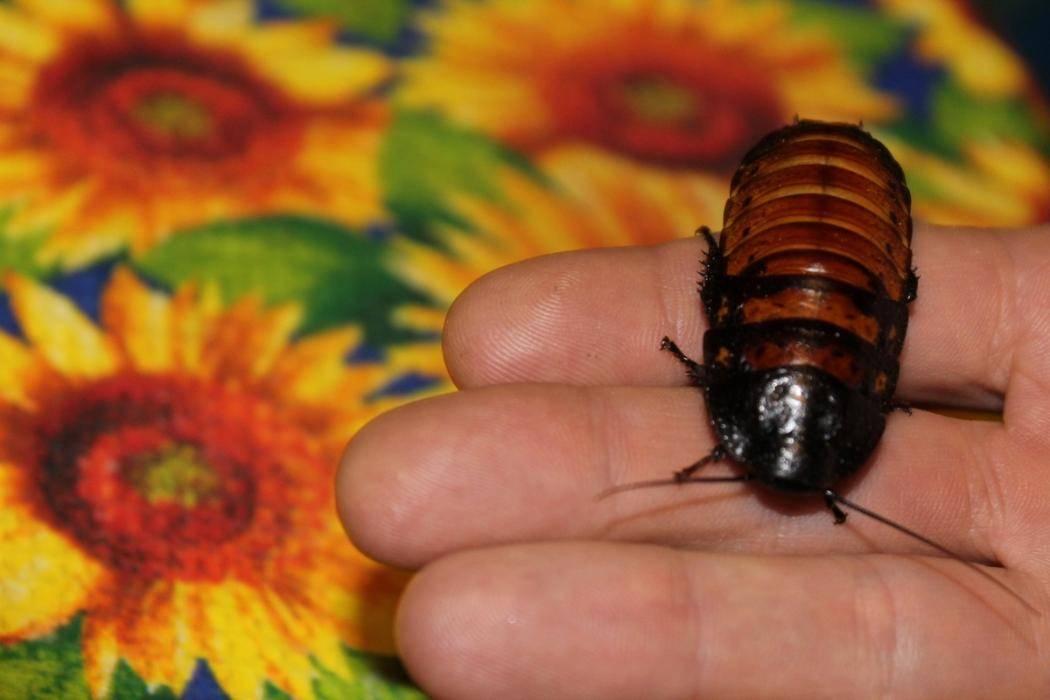 Из квартир бежали тараканы, но сначала исчезли динозавры с планеты земля. куда они делись?