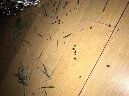 Виды и описания насекомых, похожих на клещей