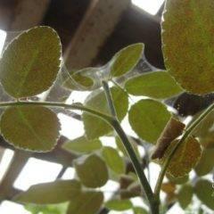 Паутинный клещ: как бороться на комнатных растениях?