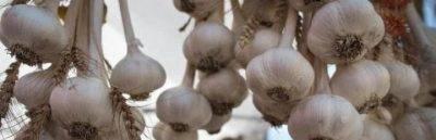Избавляемся от вредителей с помощью чеснока