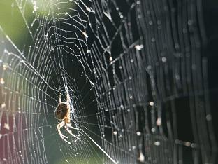 «сонник паутина приснилась, к чему снится во сне паутина»