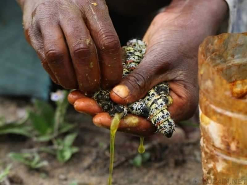 10 самых опасных насекомых для человека