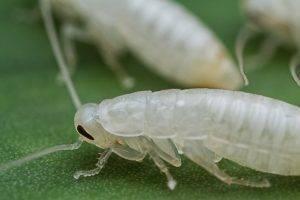 Средство от тараканов и муравьев раптор система ликвидации насекомых. где тараканы обычно прячутся в квартире и могут ли они ползти из канализации? какой вред приносят