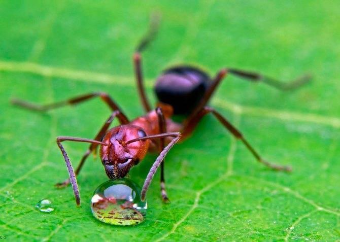 Шмель – описание, ареал, питание, виды, размножение, враги, фото и видео