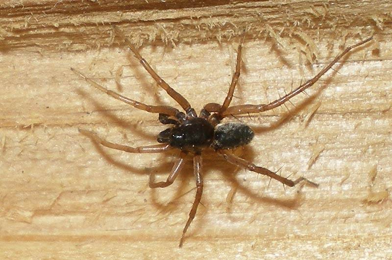 Виды пауков – названия с описанием и фото, опасность укуса