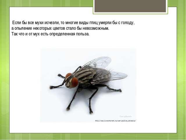 Для чего в природе нужны комары