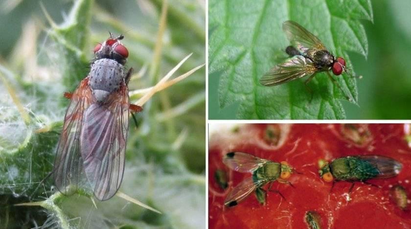 Вредители малины и методы борьбы с ними
