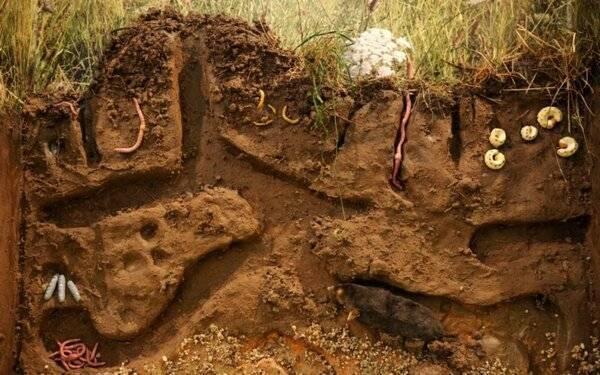 Обыкновенный крот: характеристика и среда обитания