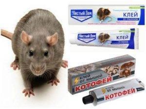 Клей для ловли мышей и крыс