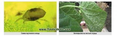 Искра золотая: инструкция по применению инсектицида двойного действия