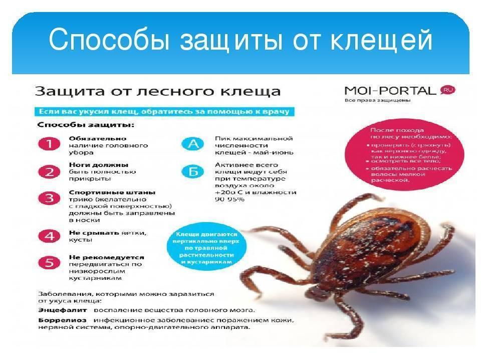 Какими заболеваниями можно заразиться при укусе клеща