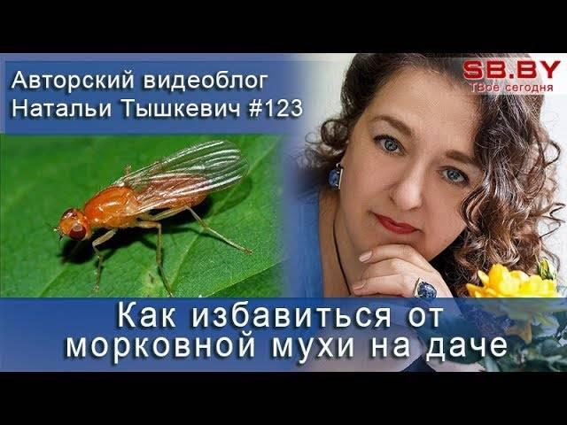 Как избавиться от мух в доме своими силами?