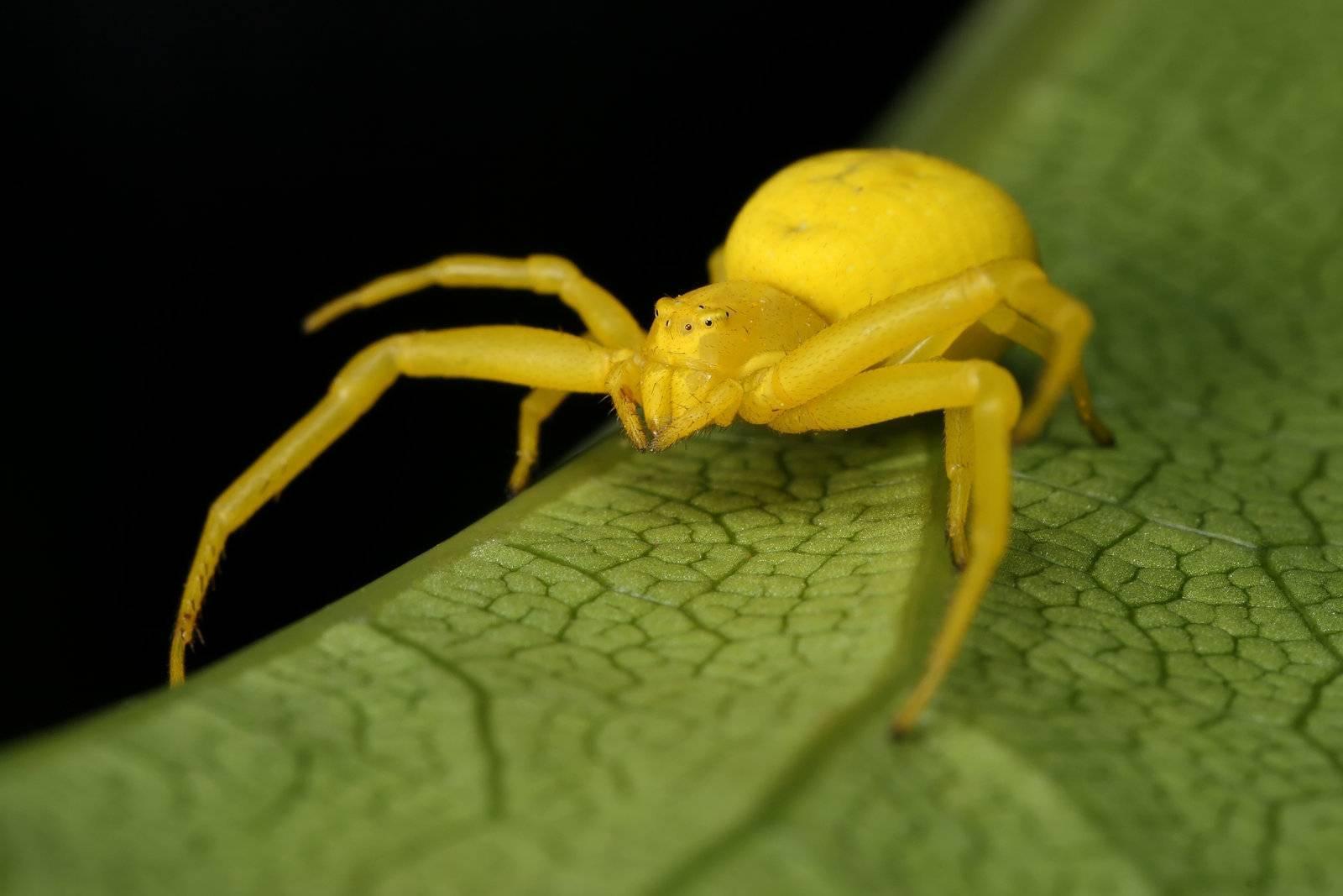 Пауки в крыму: какие ядовитые? что делать, если укусил паук? как обезопасится от пауков на природе?