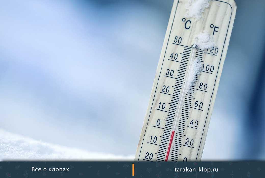 При какой температуре умирают клопы
