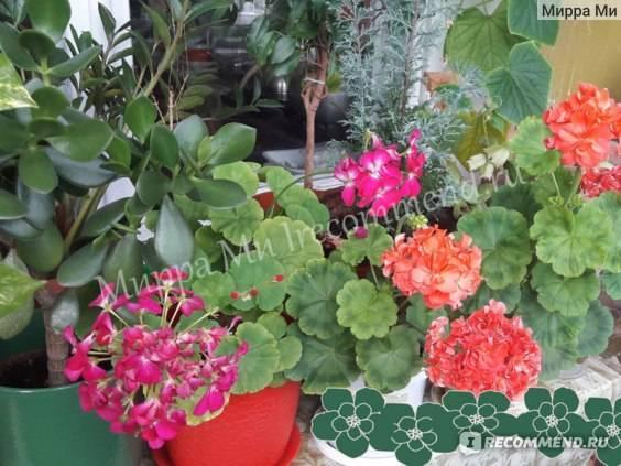 Актара против паутинного клеща – помогает ли, отзывы цветоводов и агрономов