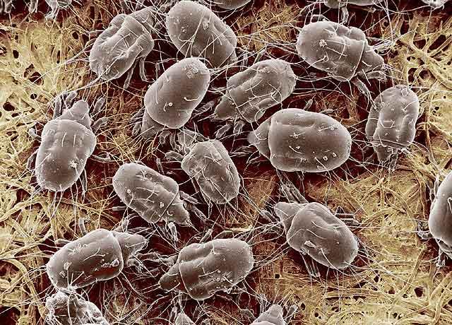 Почему в крупе появляются жучки, вредны ли они для здоровья, как от них избавиться и проводить профилактику
