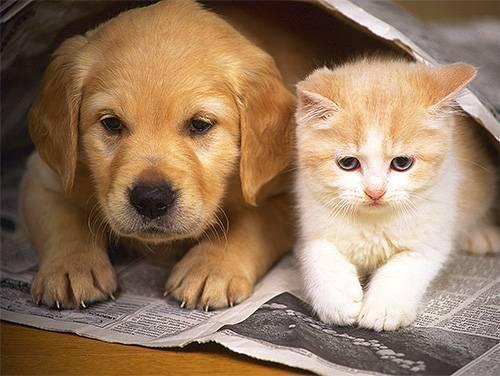 Кусают ли постельные клопы домашних животных?