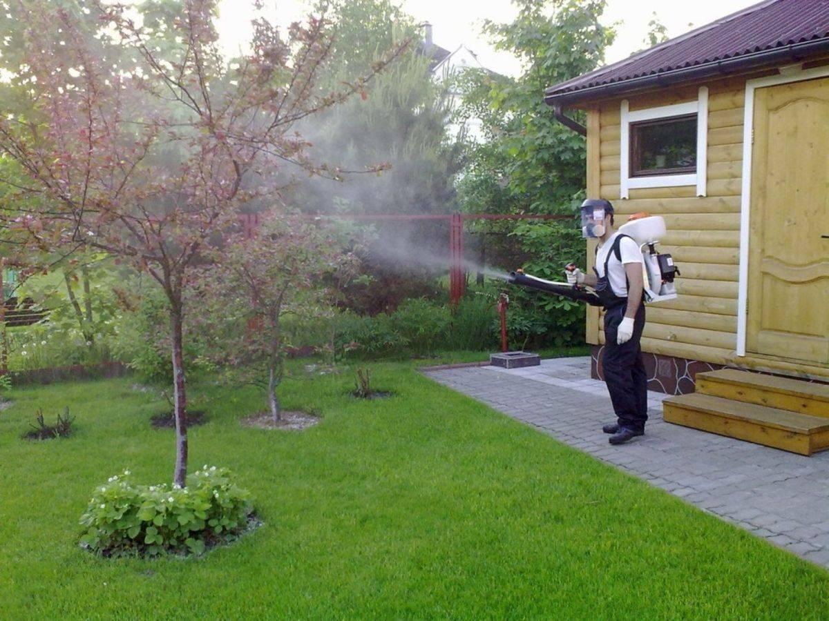 Боремся с тлёй на яблоне правильно – народные средства против химических обработок