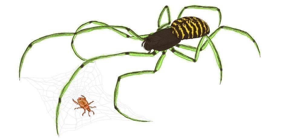 Сколько ног у муравья. строение муравья: сколько лап у насекомого? строение насекомого и его лапы