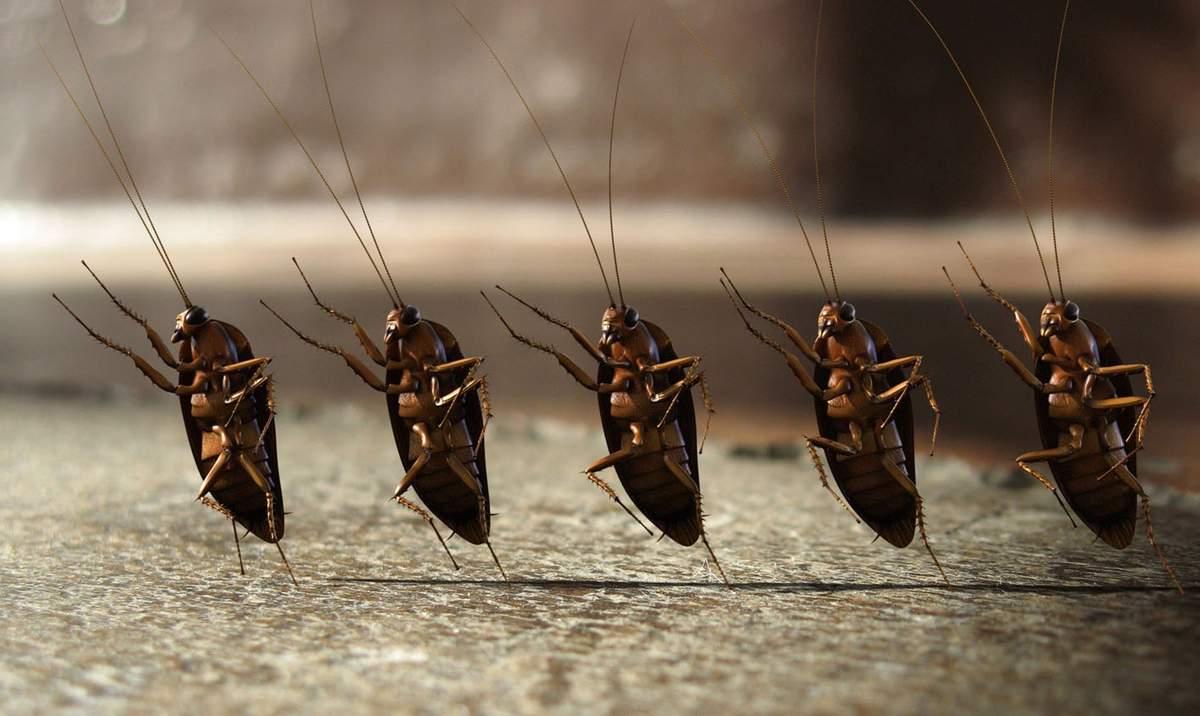 Куда делись тараканы: почему они исчезли и куда ушли? (8 фото)