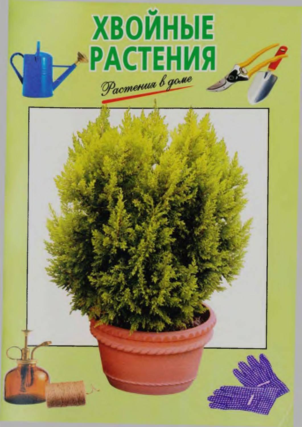 Как бороться с ложнощитовкой на комнатных растениях?