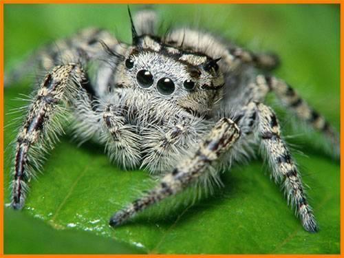 Паук это насекомое или животное paraziti паук это насекомое или животное