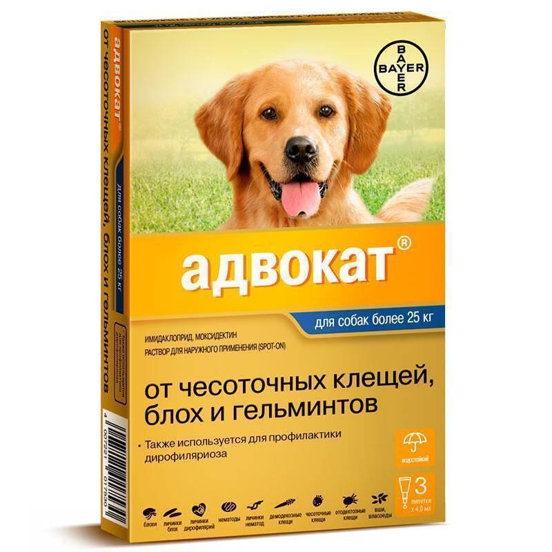"""Описание и отзывы владельцев домашних животных о каплях от клещей для собак """"адвантикс"""""""