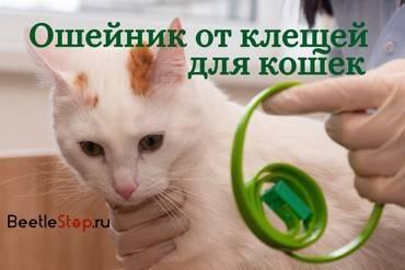 Ошейник от клещей для кошек: особенности использования
