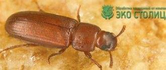 Как избавиться от муравейника на участке: различные методы отпугивания и уничтожения вредителей
