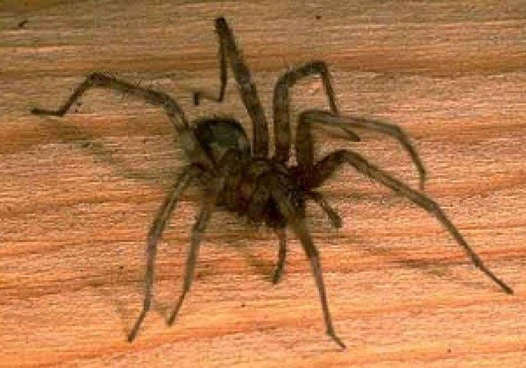 Как избавиться от пауков навсегда: народные средства, химия.