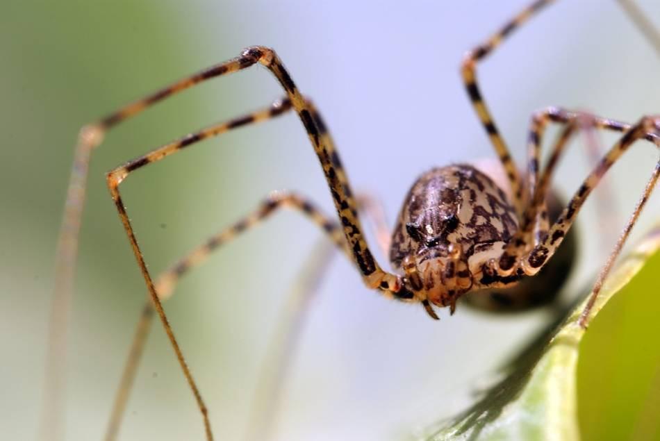 20 cредств от пауков в квартире и в частном доме