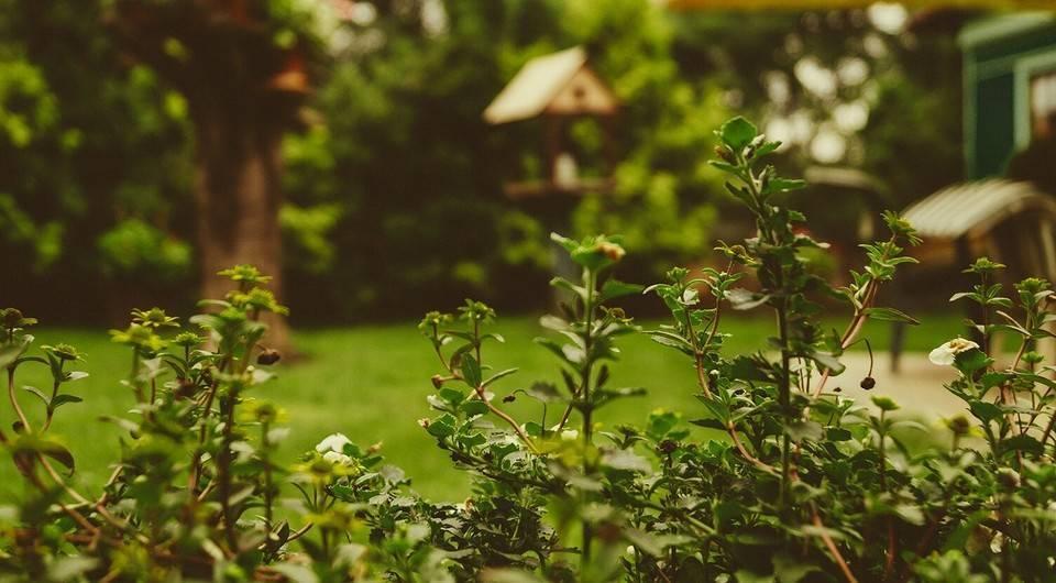Крот в огороде