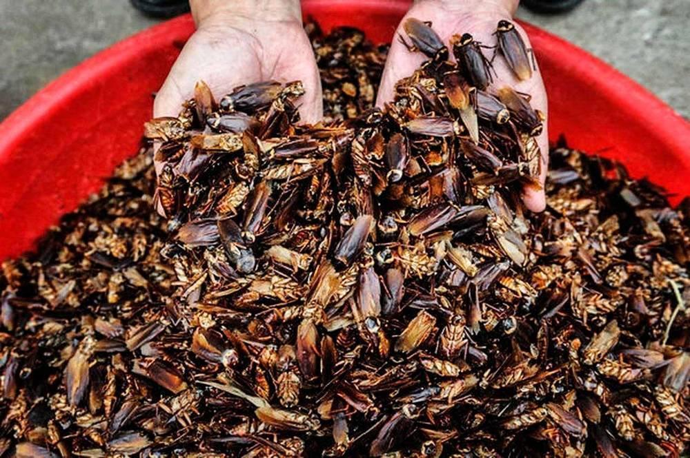 Большие и огромные тараканы, проживающие на земле – как выглядят (фото), главные особенности. как избавиться от больших мерзких черных тараканов в квартире или частном доме