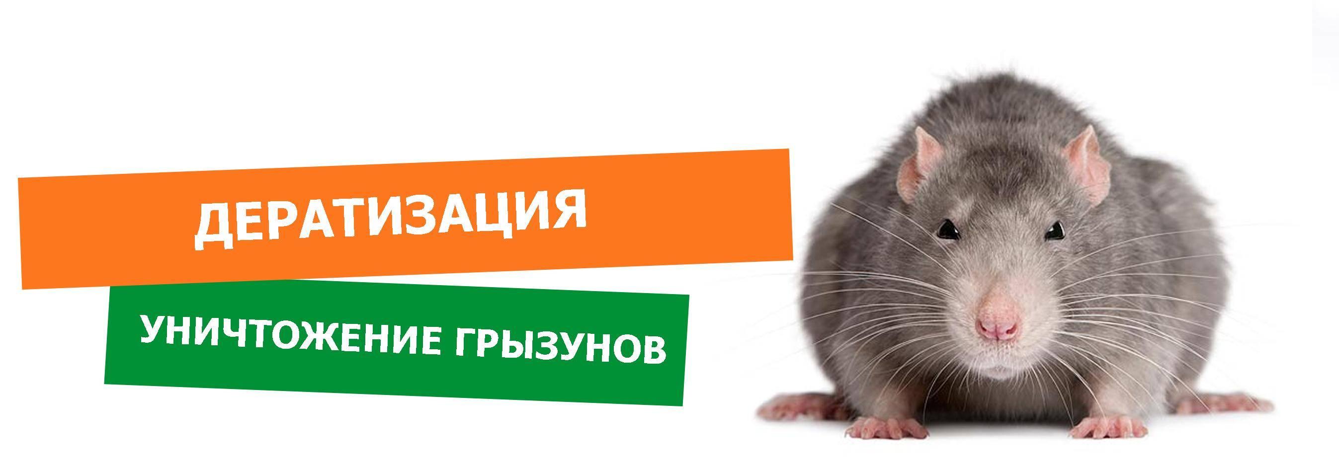 Уничтожение крыс с гарантией