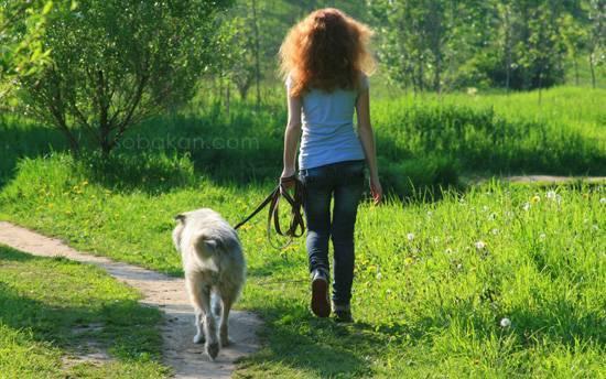 Если голова клеща осталась в теле собаки, что делать?