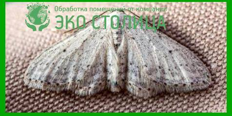 Борьба с молью в домашних условиях